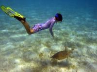 Snorkeler Green Turtle