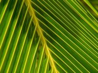 coyaba_foliage